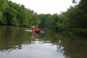 Kayak in mangroves near Din Daeng